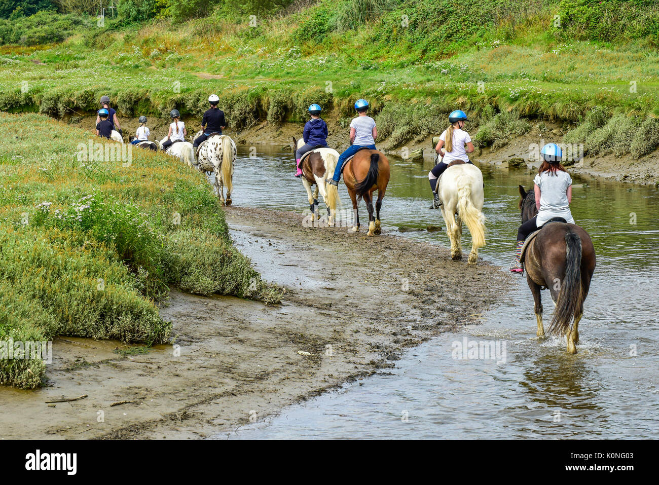 Pony trekking along the Gannel River and tidal estuary in Newquay in Cornwall. - Stock Image