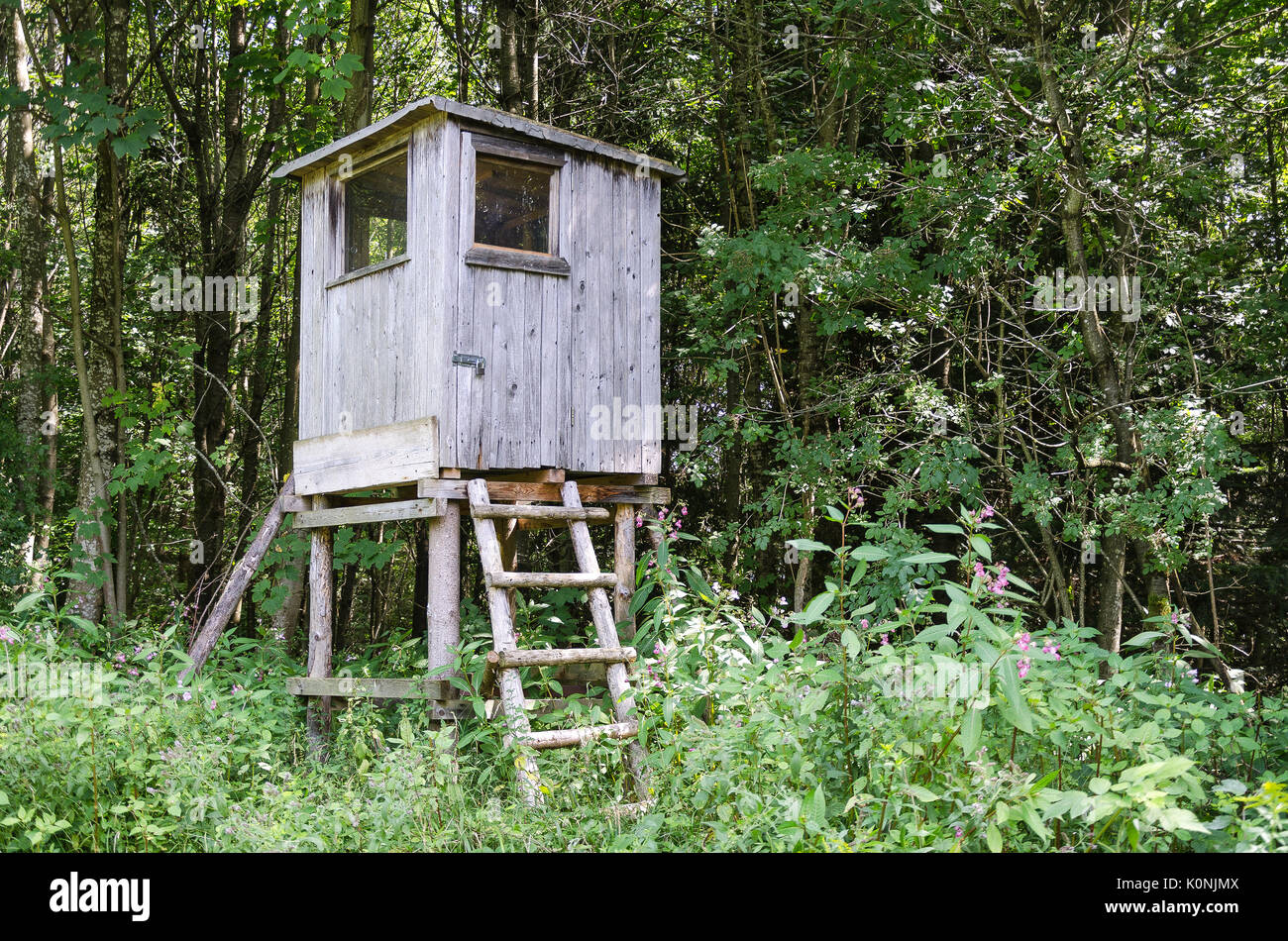 Elegant Wooden Tree Stand In A Forest, Horizontal View. Box Stand, Also Deer Stand.  Enclosed Platform To Elevate The Hunter For A Better Vantage Point.