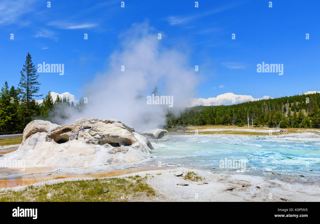 Erupting waters and steam of Grotto Geyser in Upper Geyser Basin. Yellowstone National Park - Stock Image