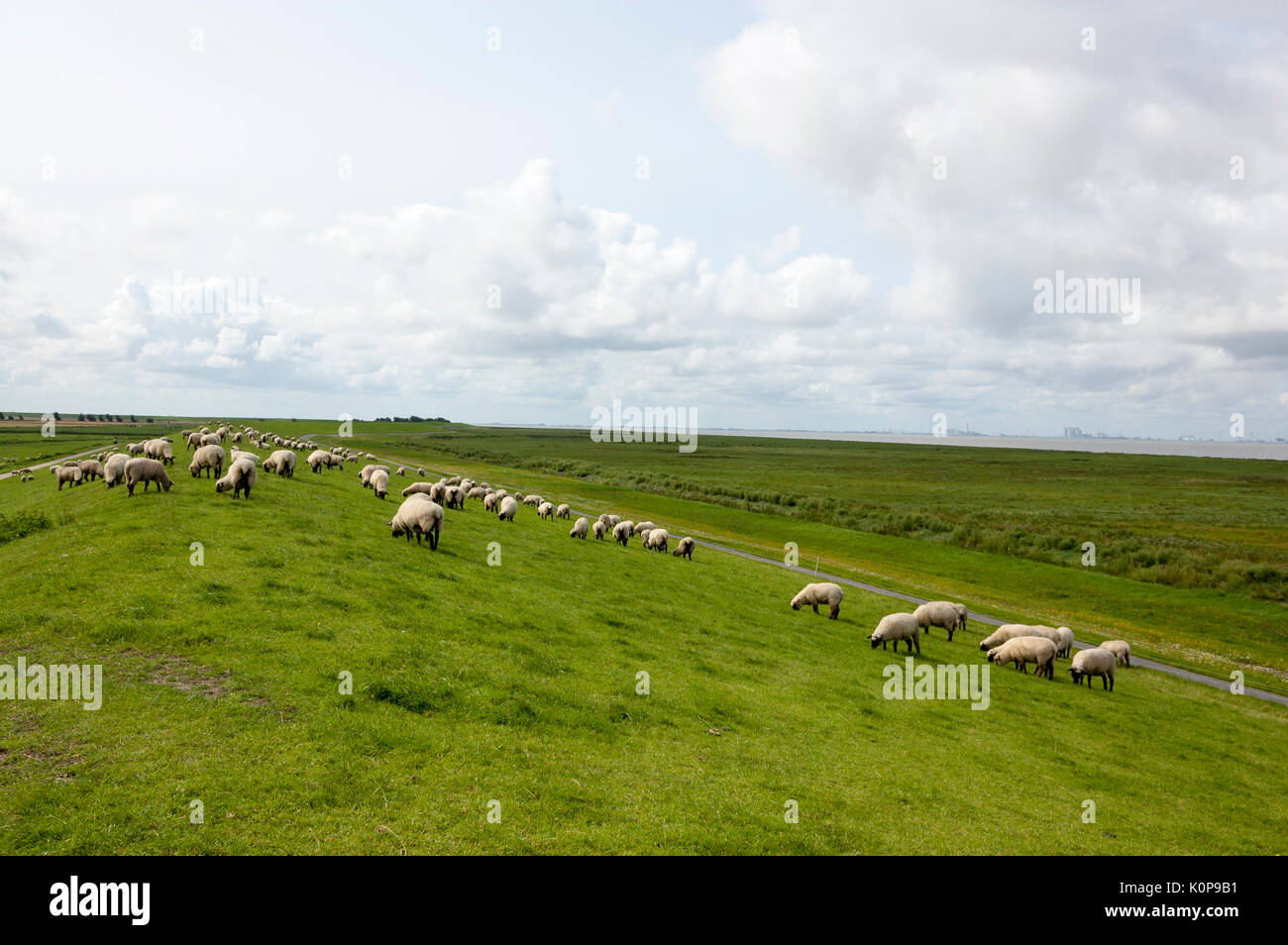 Sheep on the dike near the North Sea Stock Photo