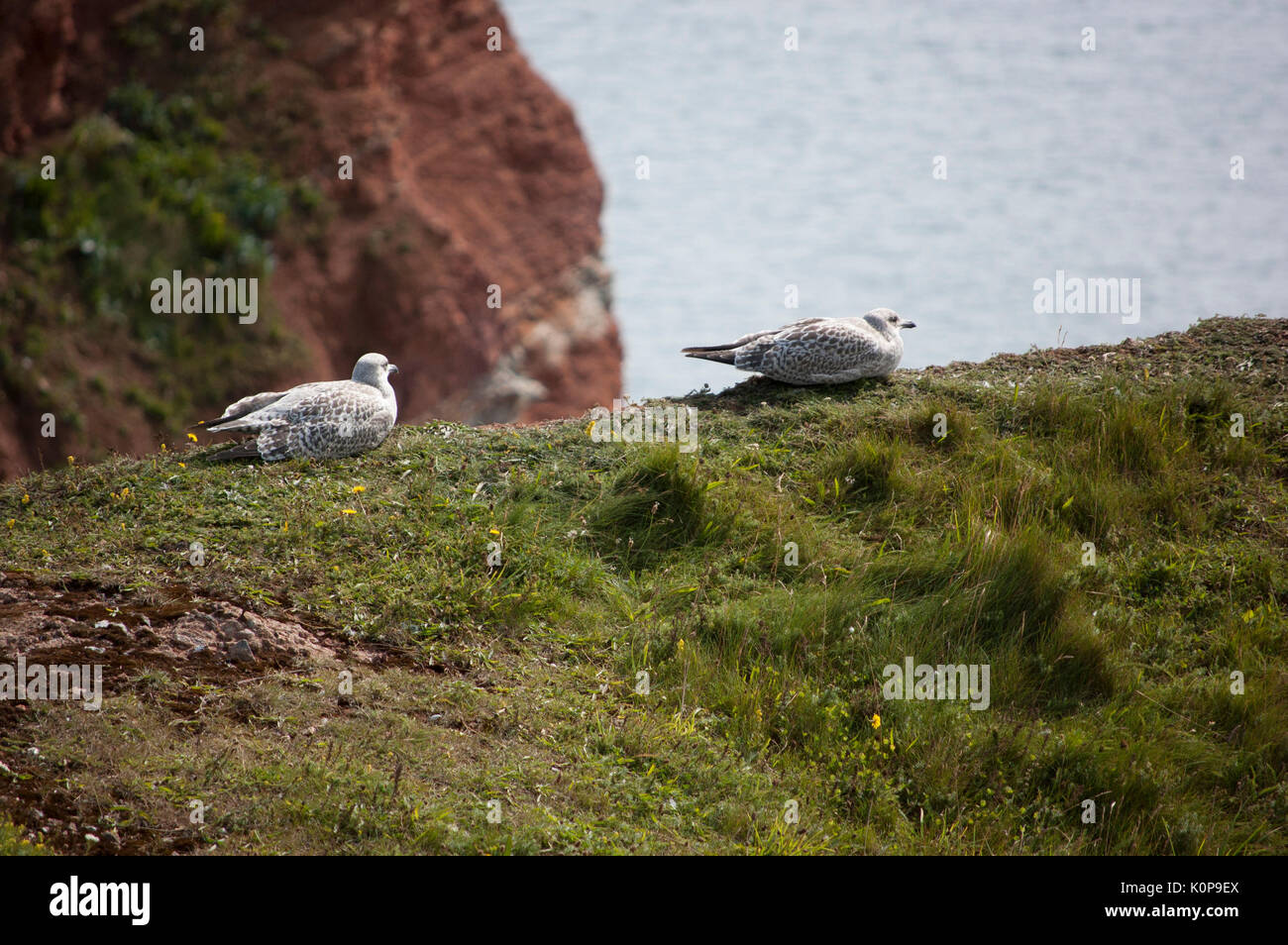 Two birds sitting next to a cliff - Stock Image