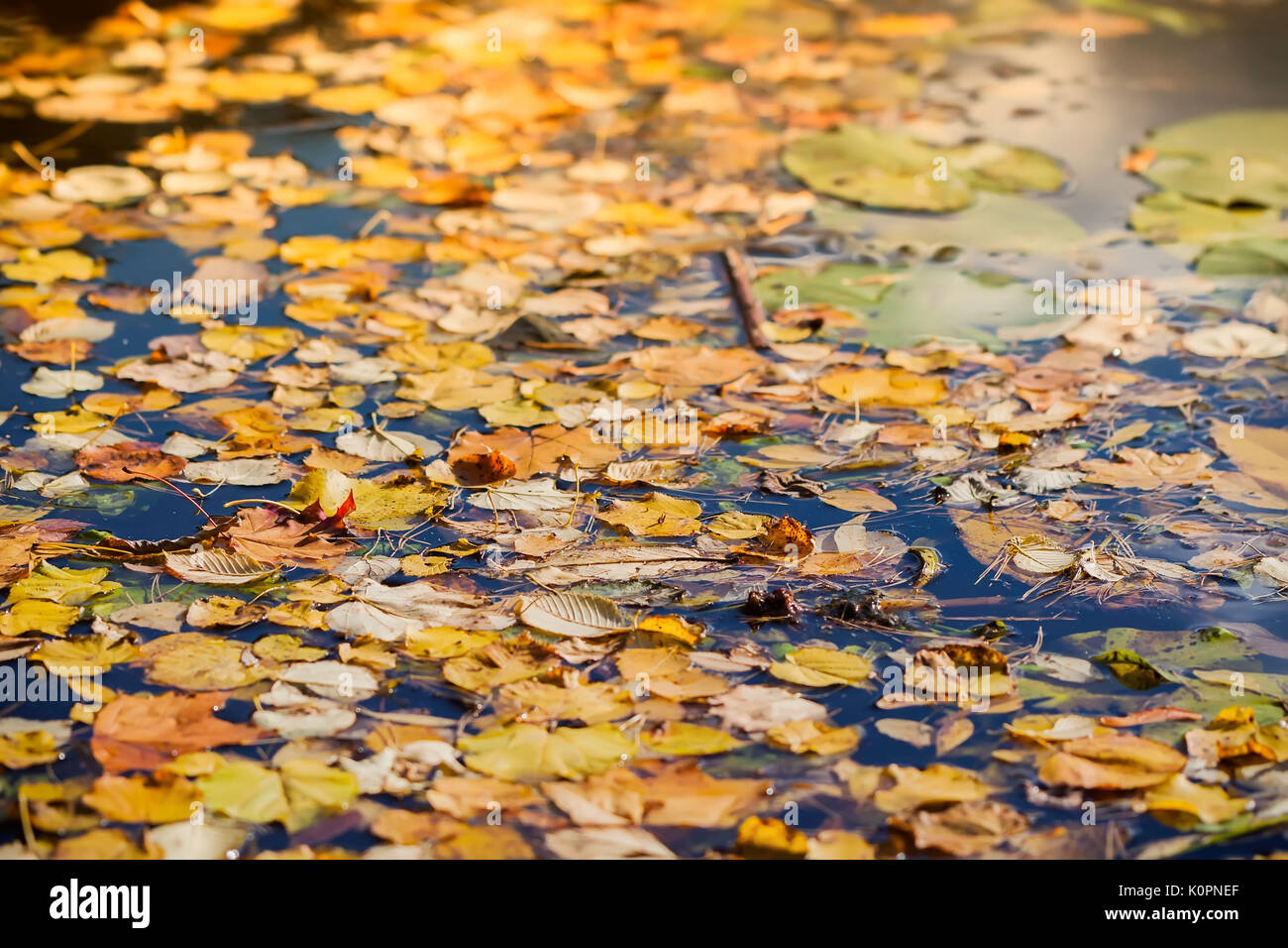 Colorful autumn leaves on cold blue water with sun reflections, golden mosaic, blurred background - Stock Image
