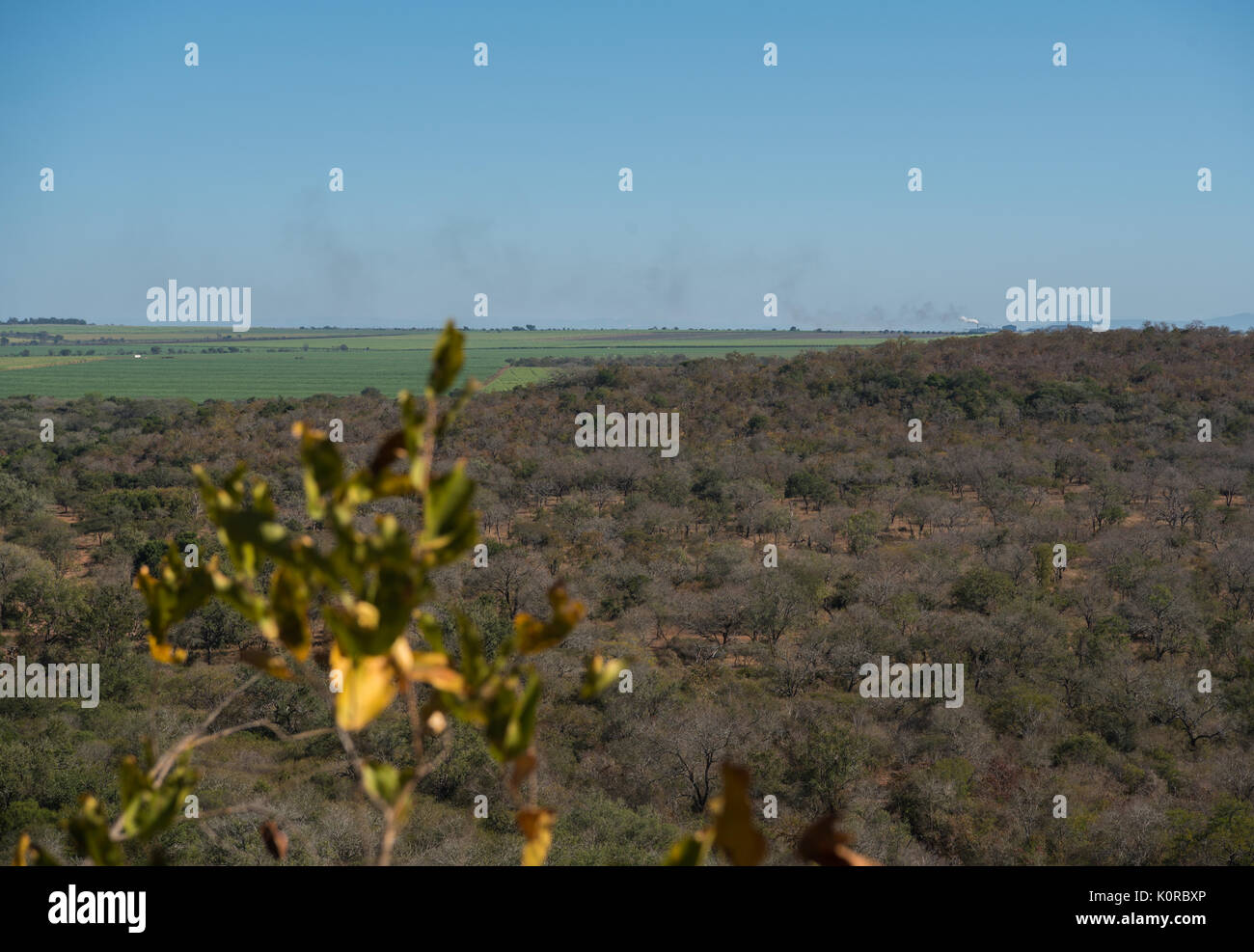 View showing private game reserve bordered by sugar cane fields - Stock Image