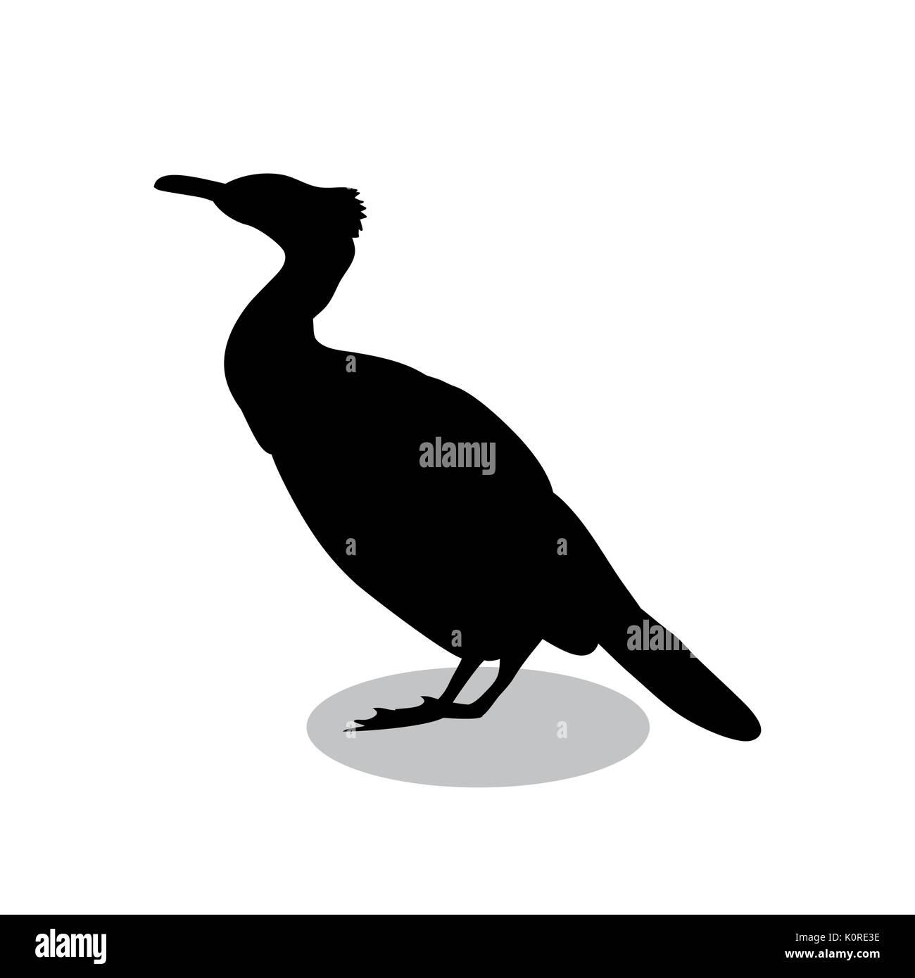 Cormorant bird black silhouette animal. Vector Illustrator. - Stock Image