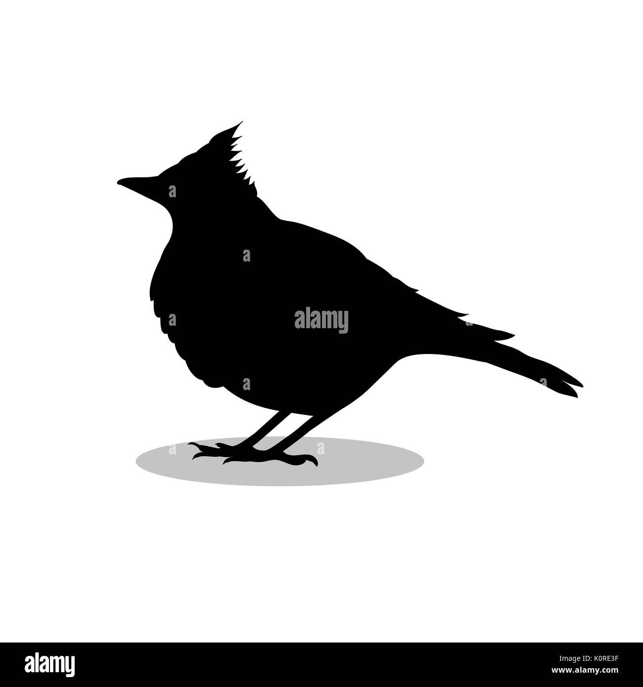 Skylark lark bird black silhouette animal. Vector Illustrator. - Stock Vector