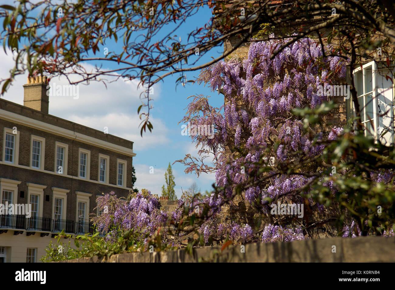 Jesus College Cambridge - Stock Image