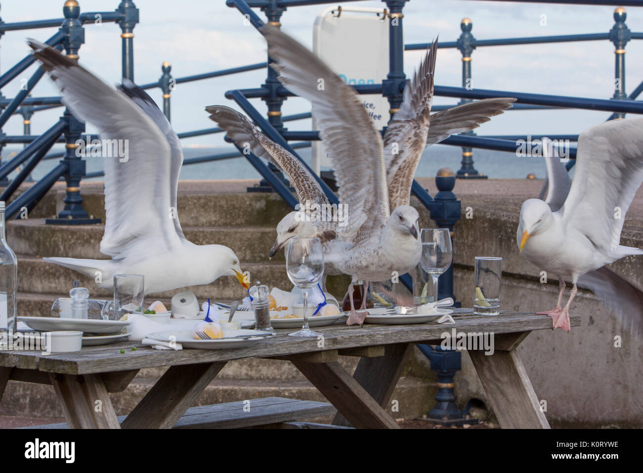 Seagulls scavenging for food. - Stock Image