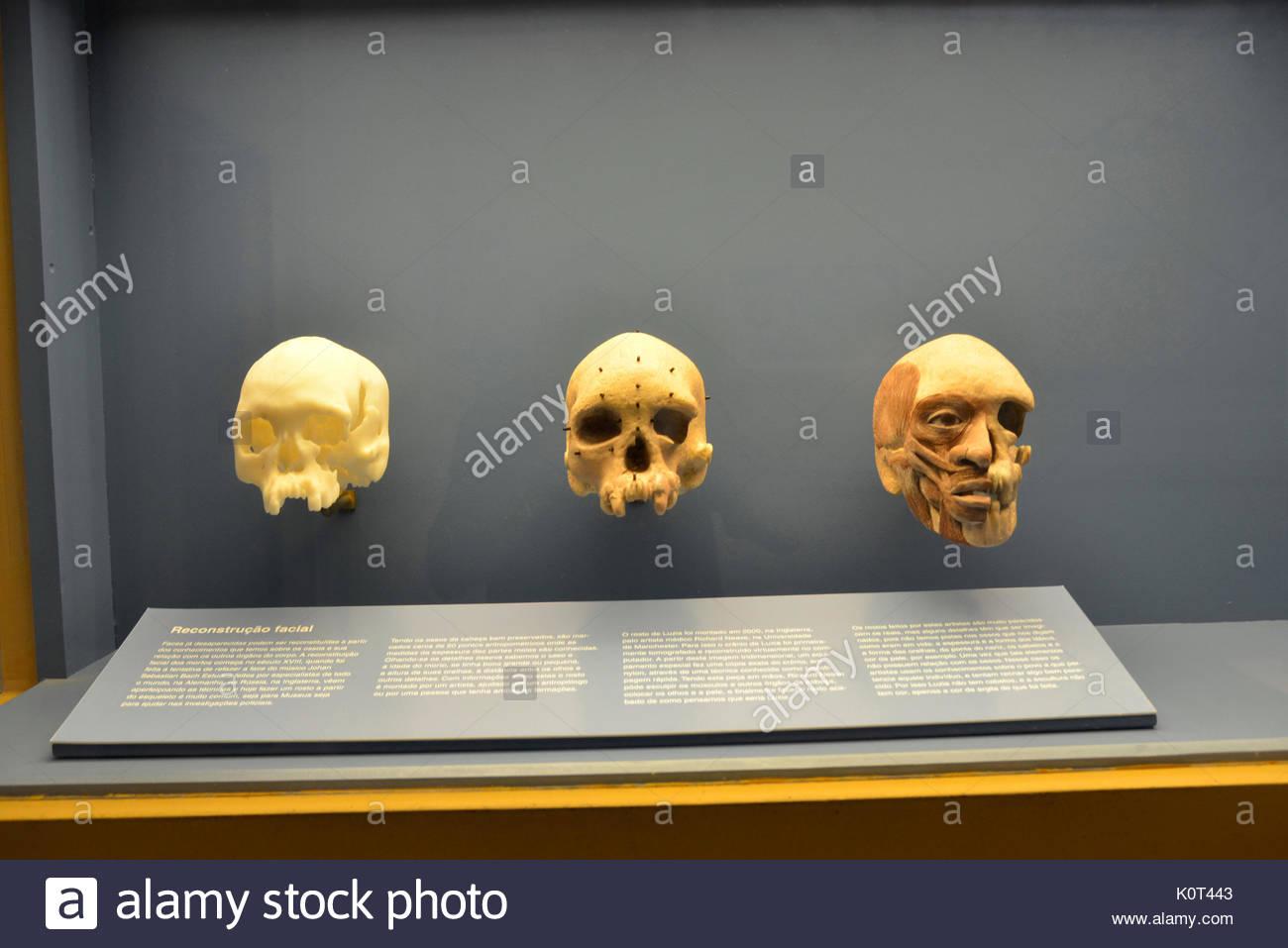 Skulls on display inside the National Museum of Quinta da Boa Vista linked to UFRJ in the district of São Cristóvão, Rio de Janeiro, Rio de Janeiro, B - Stock Image