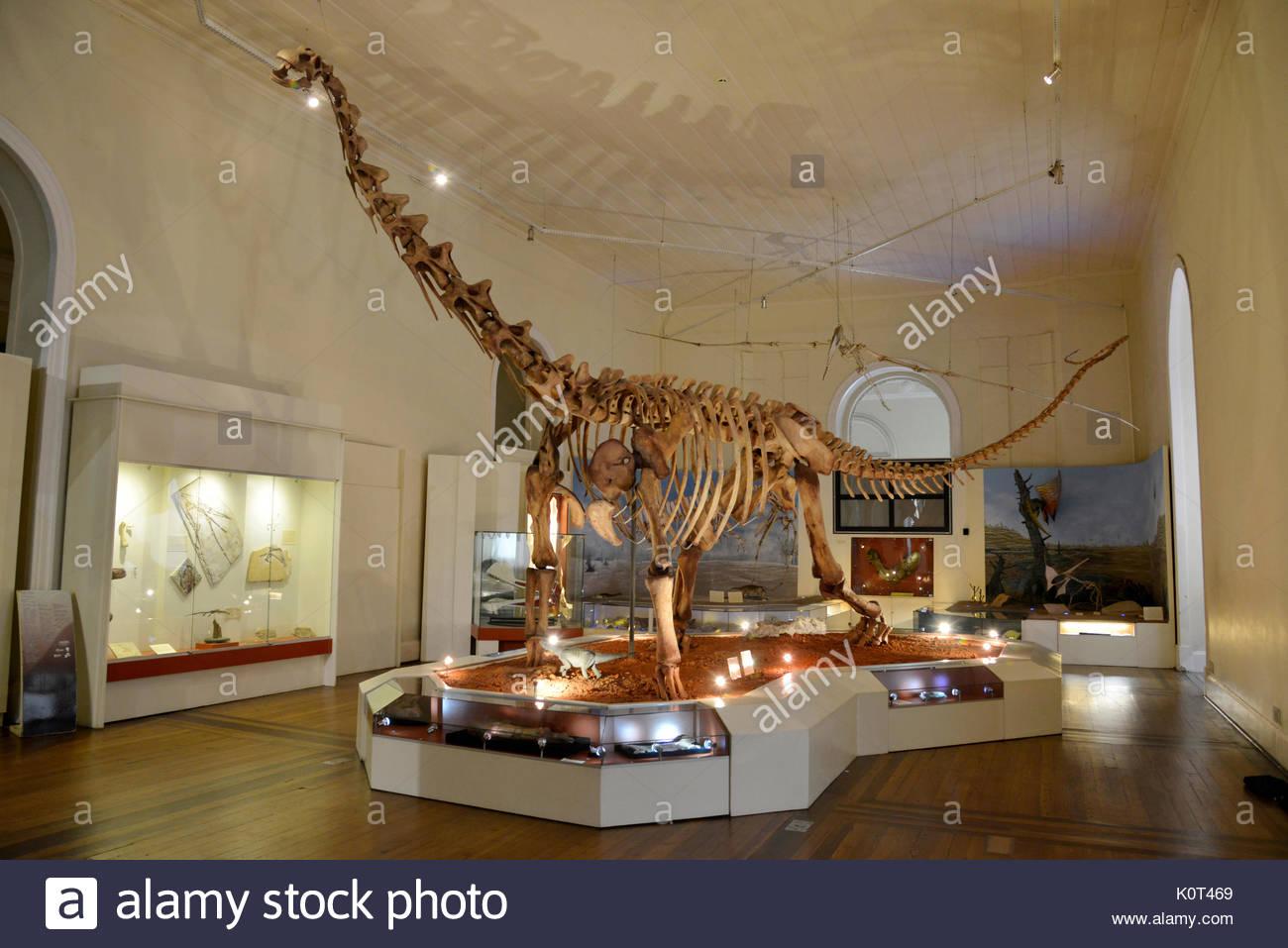 Dinosaur fossil on display inside the National Museum of Quinta da Boa Vista linked to UFRJ in the São Cristóvão neighborhood, Rio de Janeiro, Rio de  - Stock Image