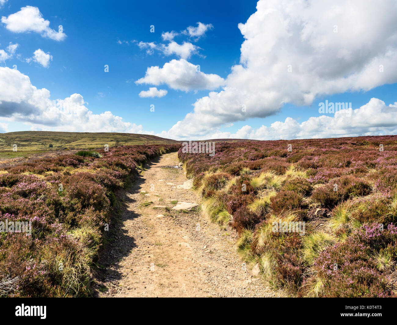 The Pennine Way on Stanbury Moor near Haworth West Yorkshire England - Stock Image