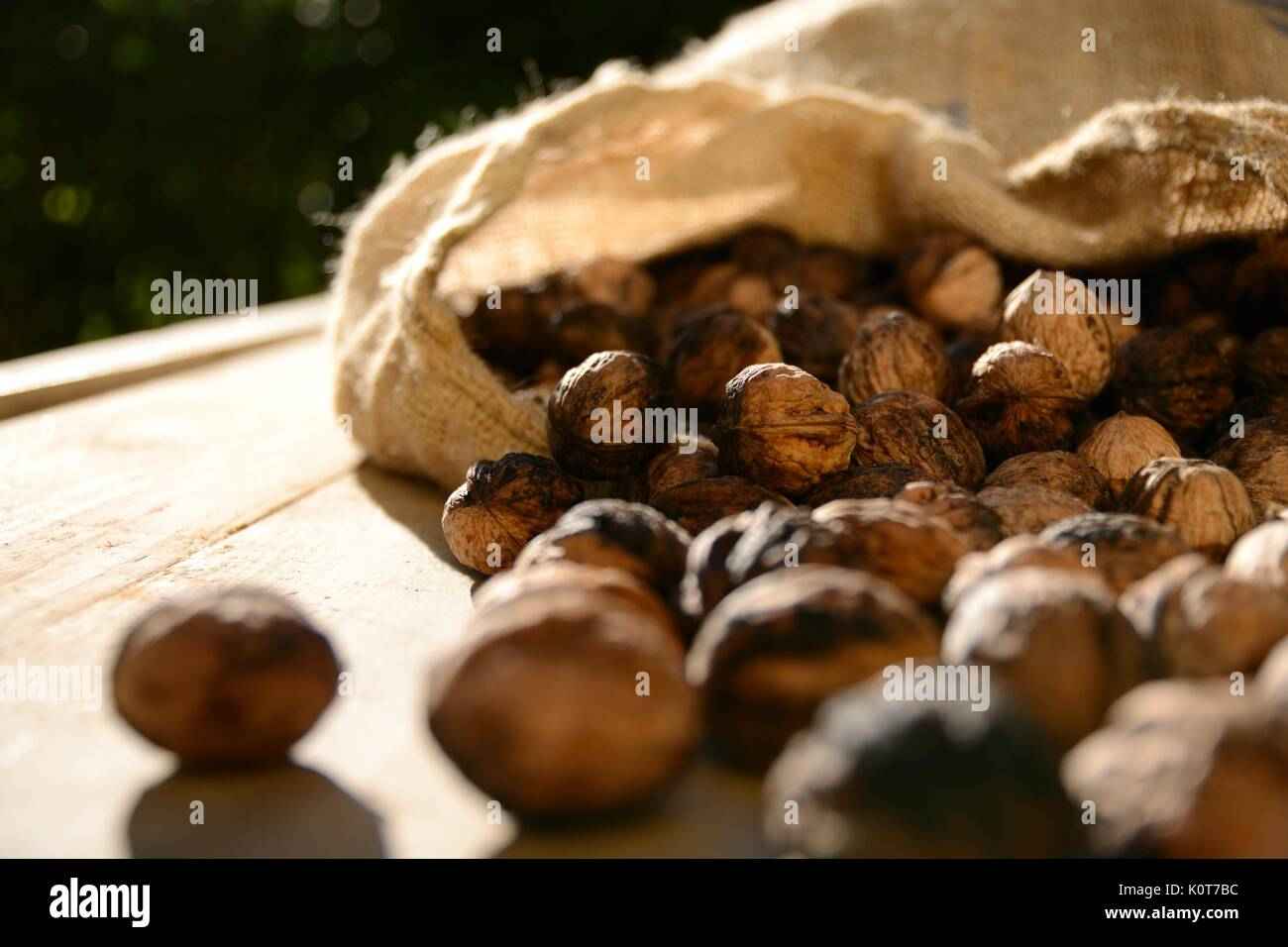 Walnuts out of a canvas bag on a rustic wooden table. Landscape format. - Stock Image