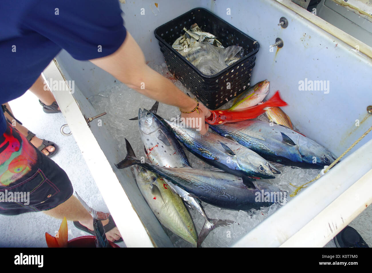 Close up of some tuna fishes inside of a white box at the Fort Lauderdale, Florida Stock Photo