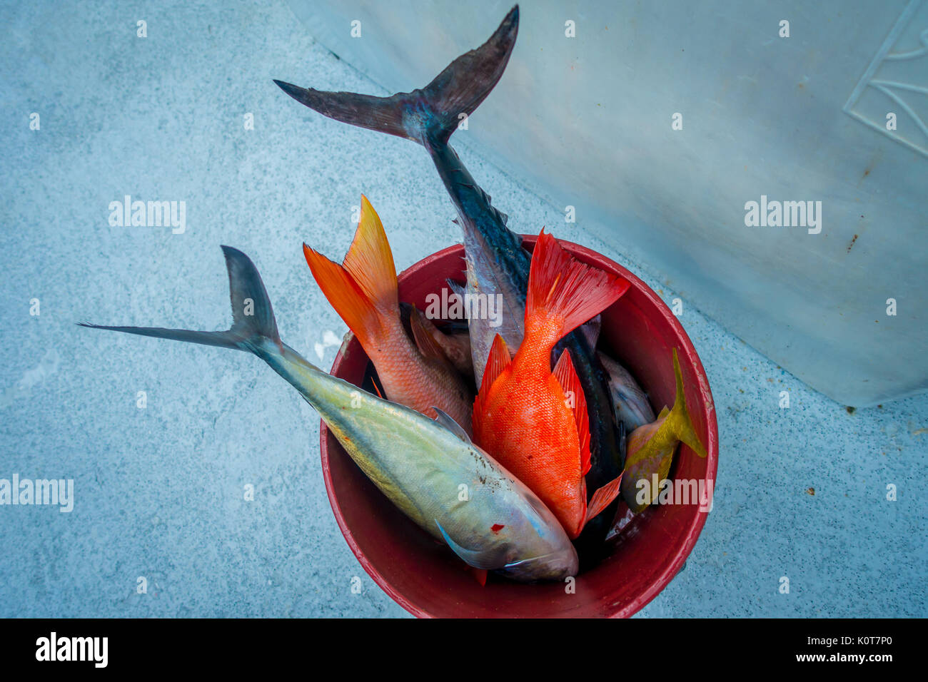 Close up of assorted fishes inside of a red pail at the Fort Lauderdale, Florida Stock Photo