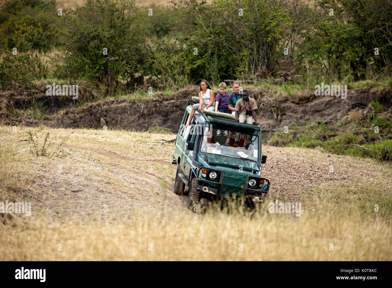 Tour truck filled with tourists driving through the Masai Mara in search of the big 5 game. - Stock Image