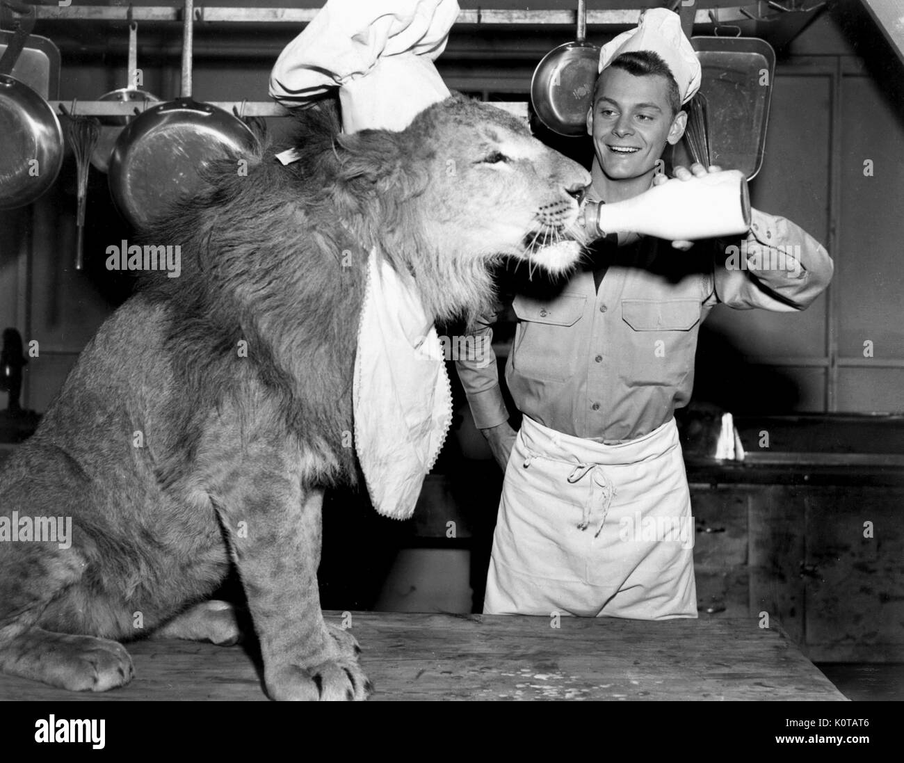 jackie-the-lion-carleton-carpenter-fearl