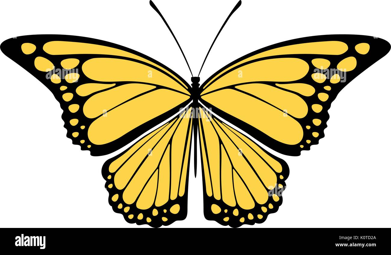 butterfly design isolated on white background in vector format very easy to edit, individual objects - Stock Vector