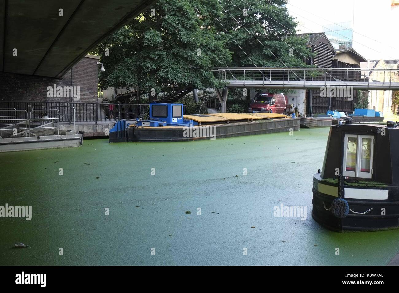 London, UK 25th August 2017. Little Venice Canal is covered in Algae after the recent warm weather.If the algae is toxic it uses up oxygen in the water at night which can suffocate fish and other creatures.Advise from the UK Enviroment Agency is to assume it is toxic and keep pets and children away from the water and avoid skin contact with the water or algae. Credit: claire doherty/Alamy Live News - Stock Image