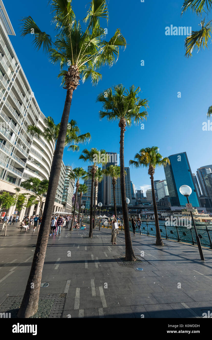Harbor promenade and financial district, docklands The Rocks, Sydney, New South Wales, Australia - Stock Image