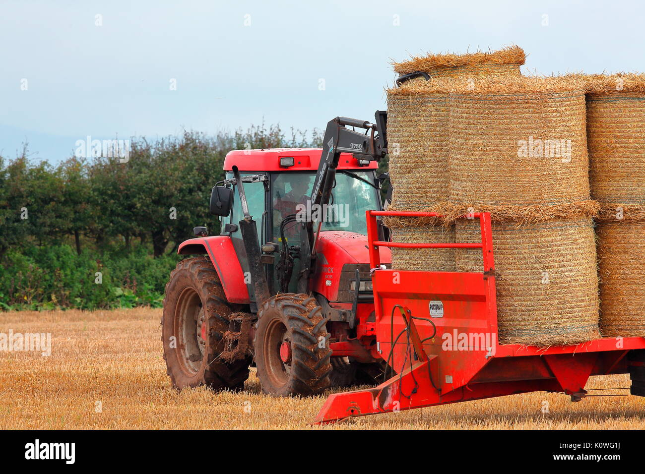 A farmer collects his round straw bales from a field with his specially adapted tractor with a grab for picking up the huge bales and rotating them. - Stock Image