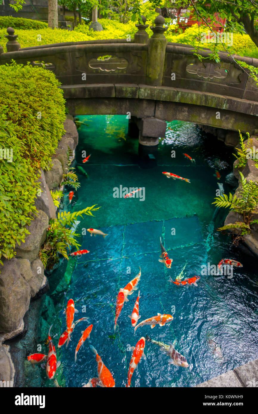 Japan tokyo asakusa temple small stock photos japan for Beautiful koi ponds