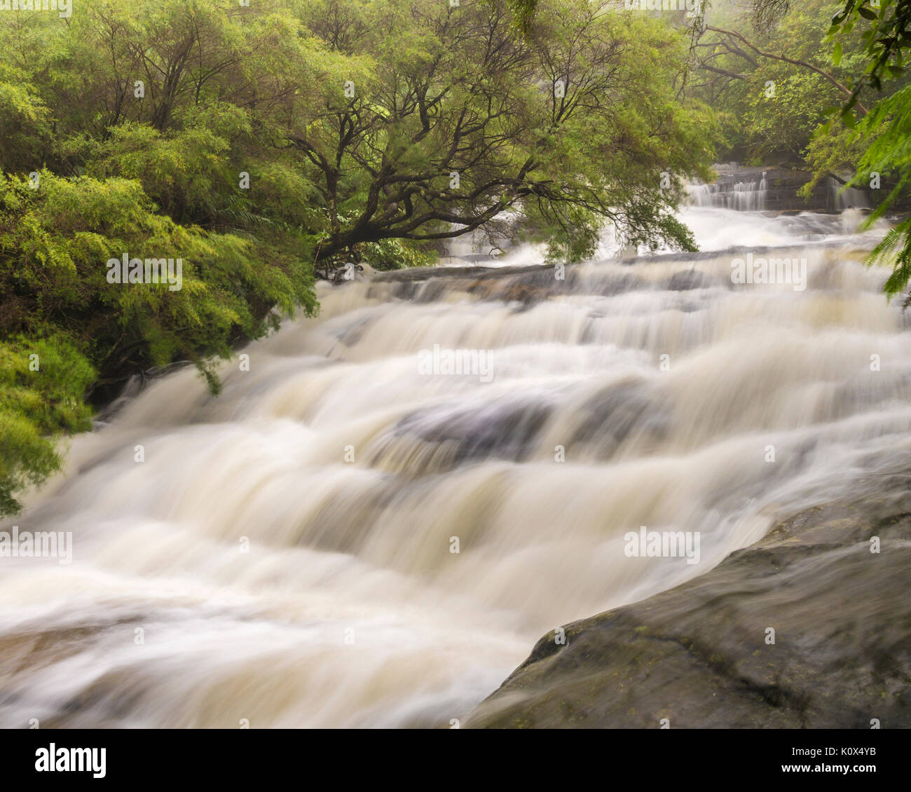 After of heavy rain the water at Leura cascades is running high, Leura, Blue Mountains, NSW, Australia - Stock Image