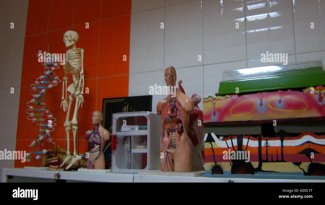 Abu Reyahan al Biruni Middle School   plastic human body models   Nishapur 002 - Stock Image
