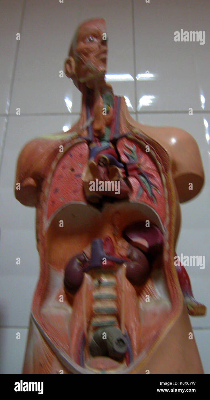 Abu Reyahan al Biruni Middle School   plastic human body models   Nishapur 003 - Stock Image