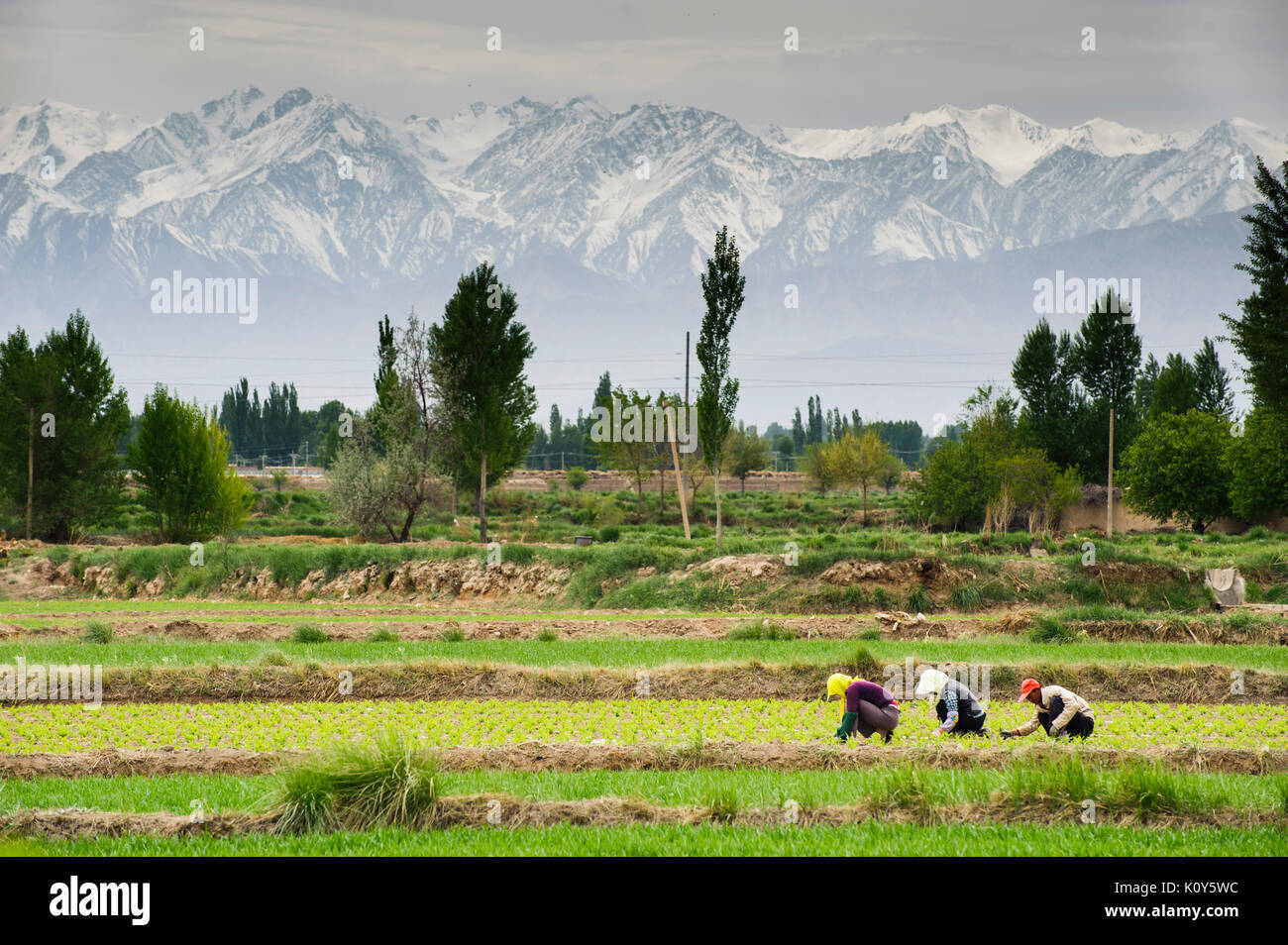 Farmers in Gansu province. China - Stock Image