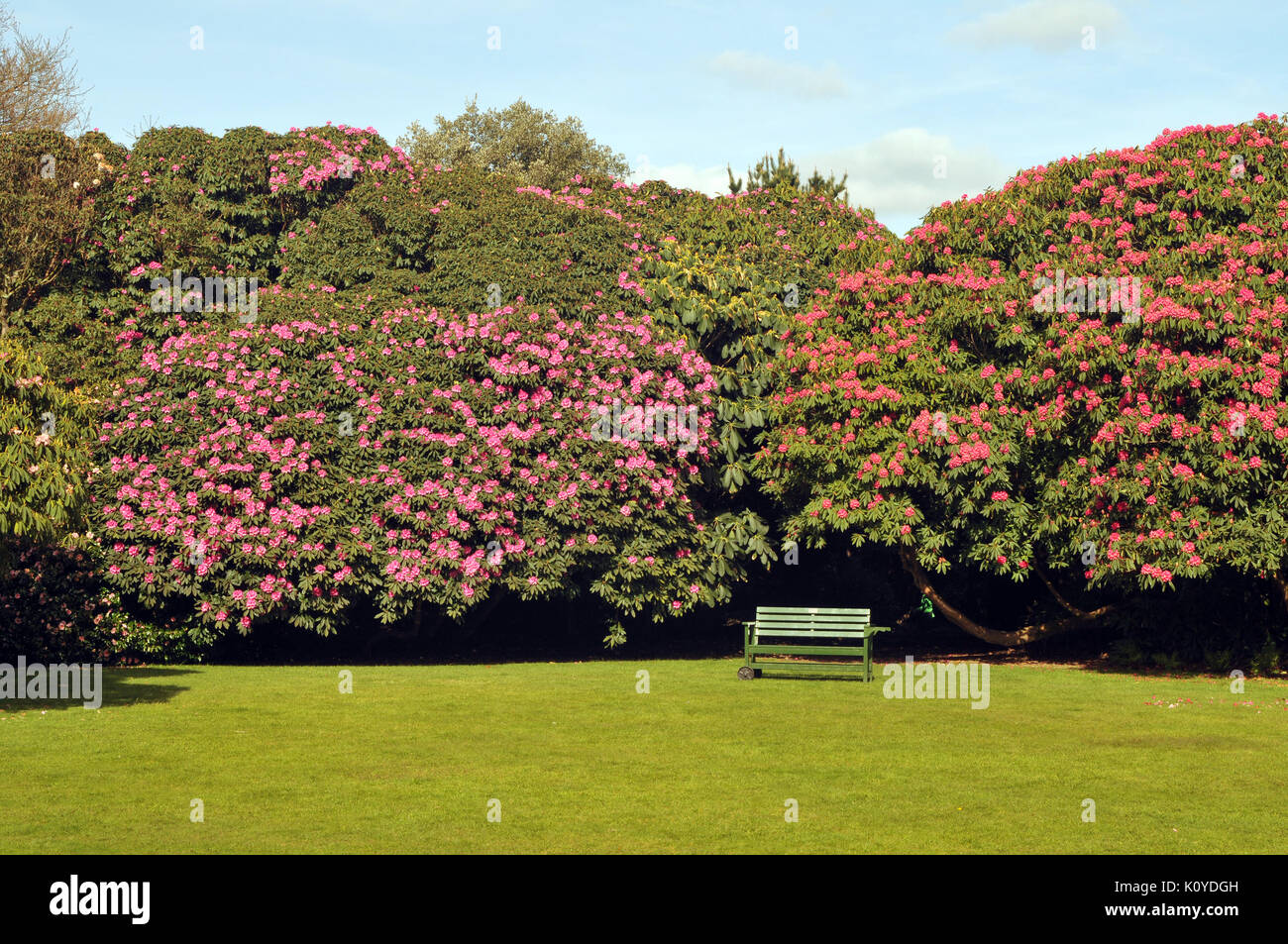 A Park or garden bench on a lawn at the lost gardens of heligan in Cornwall somewhere to sit and take a break or a rest in the shade near trees bushes - Stock Image