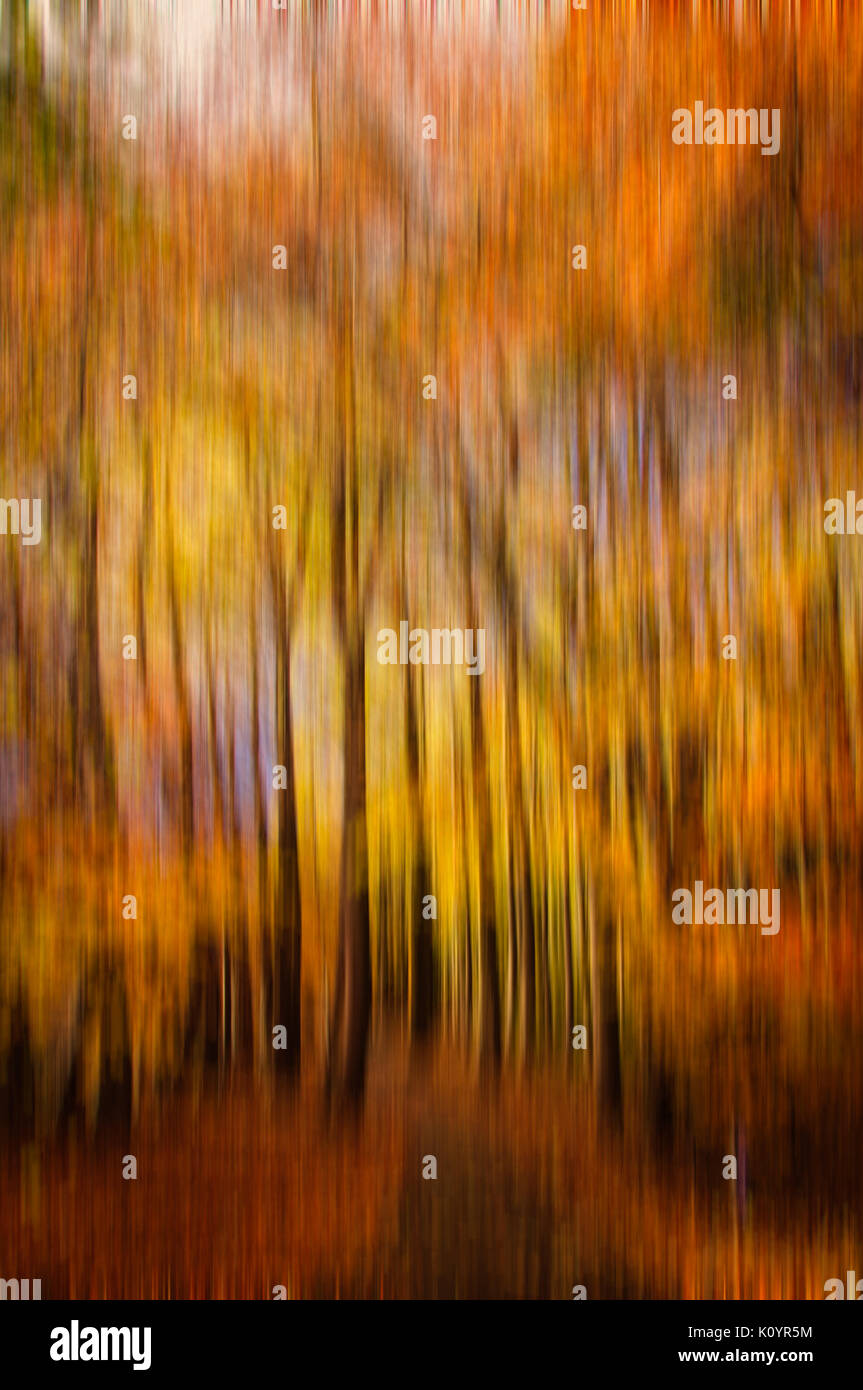 Abstract forest with motion blur, Abstract colorful background, Autumnal colors - Stock Image