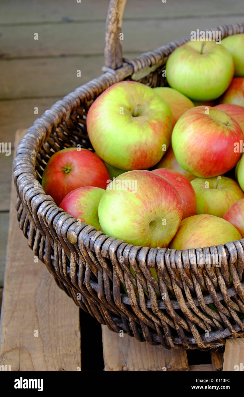 english apples in wicker basket - Stock Image
