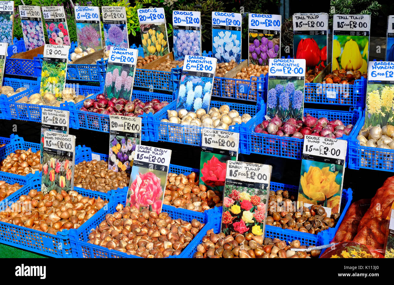 bulbs for sale on nursery market stall - Stock Image