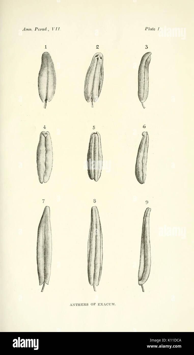 Annals of the Royal Botanic Gardens, Peradeniya BHL2915545 Stock Photo