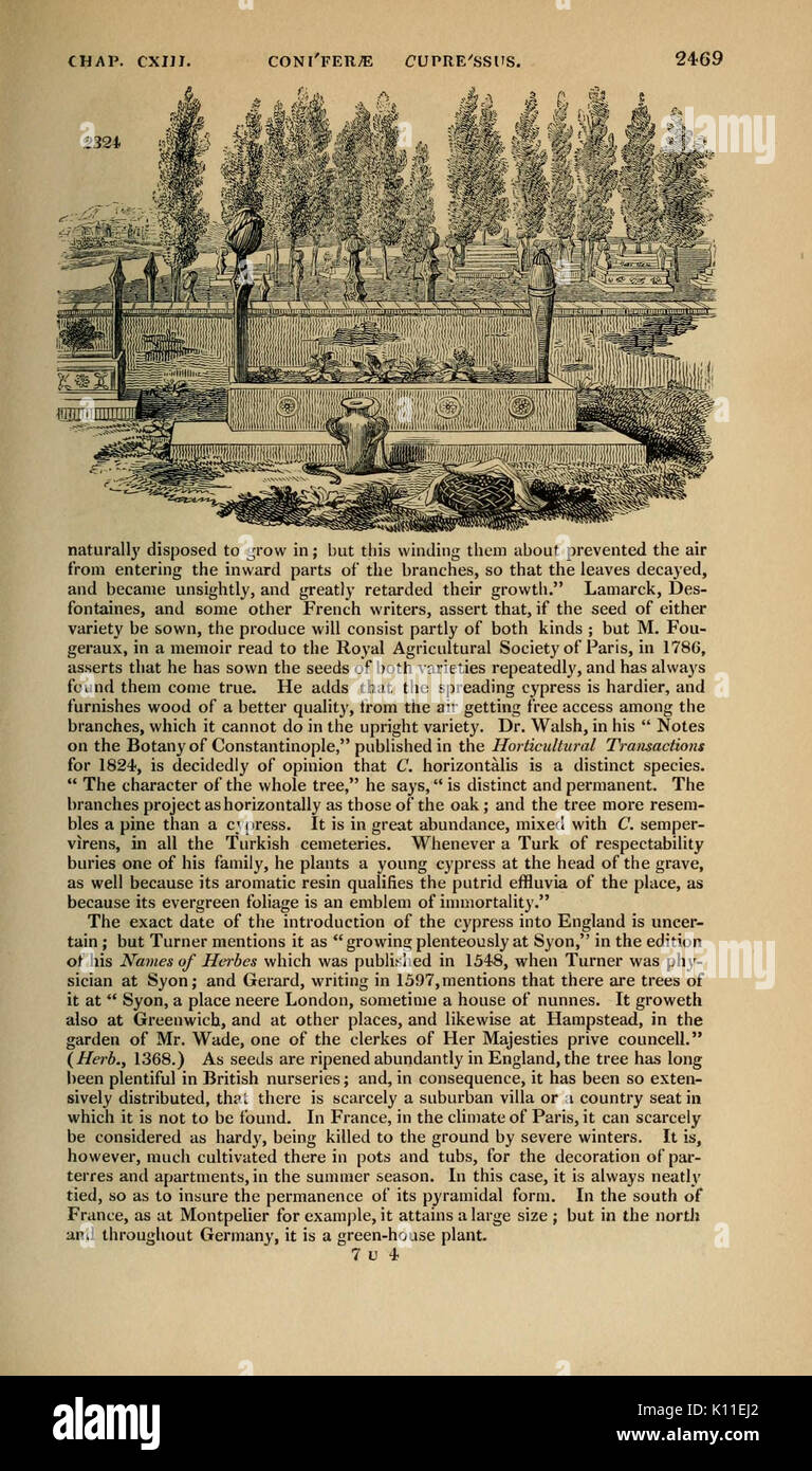 Arboretum et fruticetum britannicum (Page 2469) BHL12975131 - Stock Image