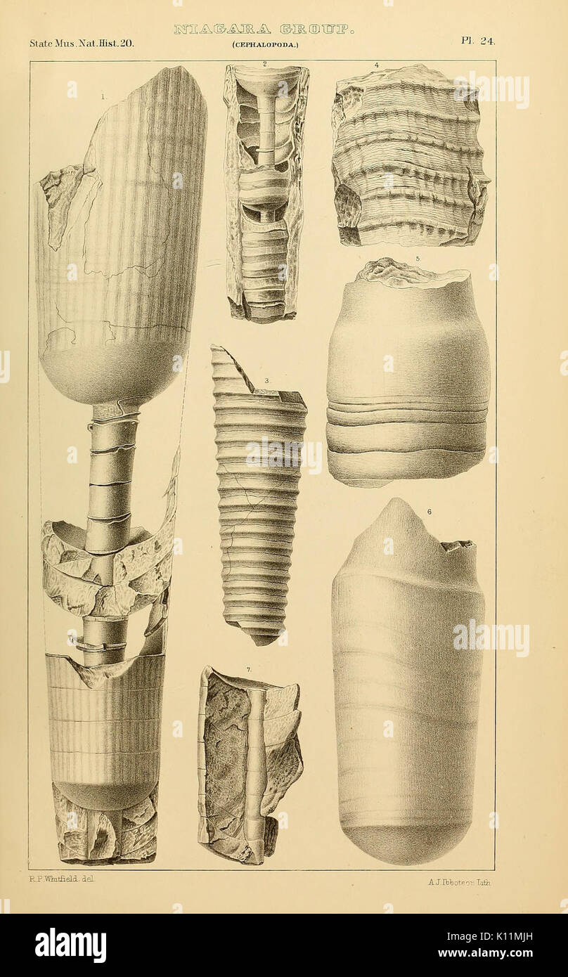 Annual Report of the Regents of the University on the condition of the State Cabinet of Natural History BHL36348712 Stock Photo