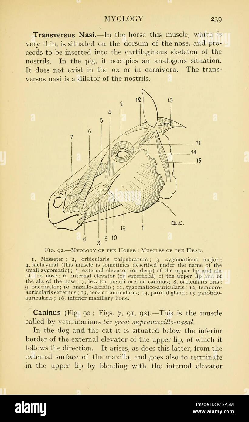 Anatomy Illustration Vintage Stock Photos Anatomy Illustration
