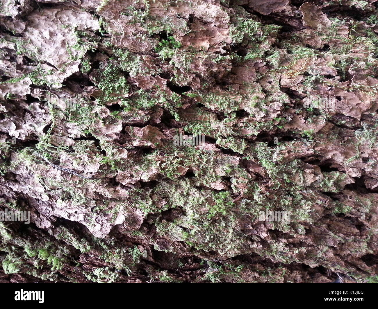 Mossy Wood Texture 5 - Stock Image