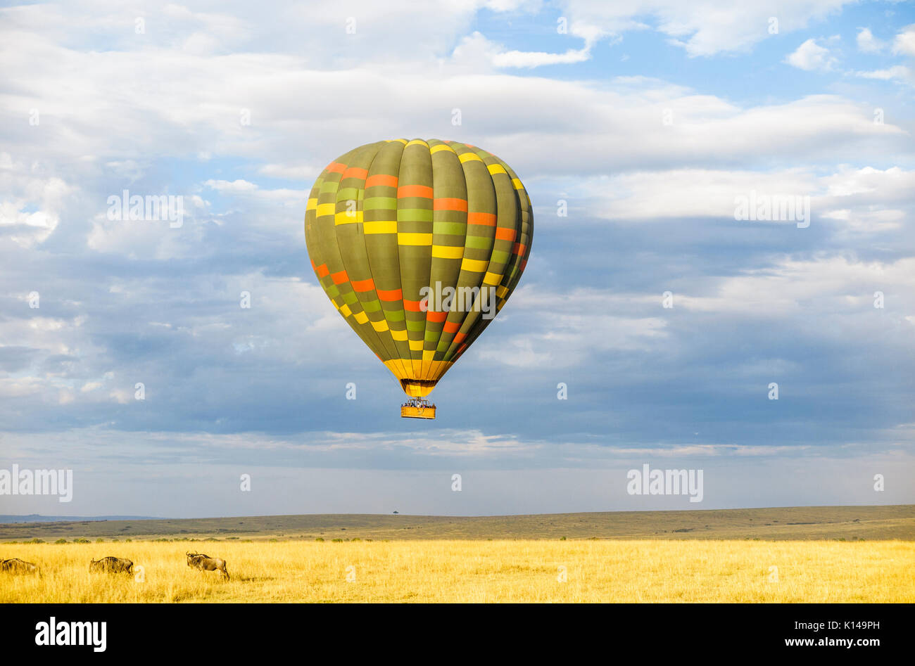 Early morning sightseeing and safari game viewing by colourful green hot-air balloon over the savannah plain in - Stock Image