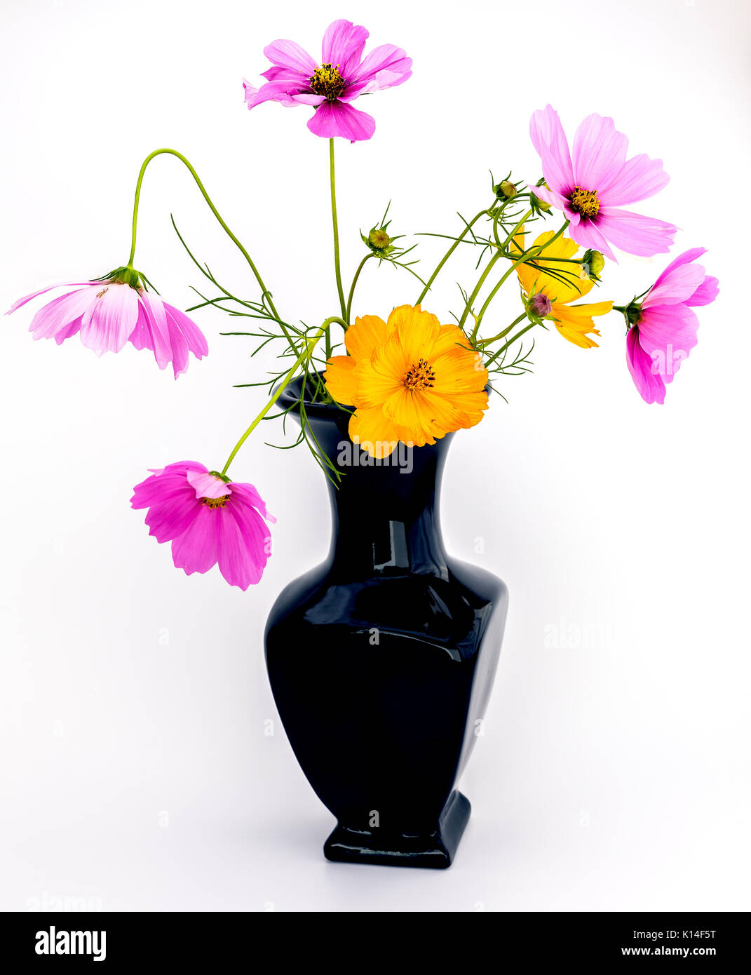Garden flowers on black background stock photos garden flowers black vase with a bouquet of purple and orange wild flowers isolated on a white background reviewsmspy
