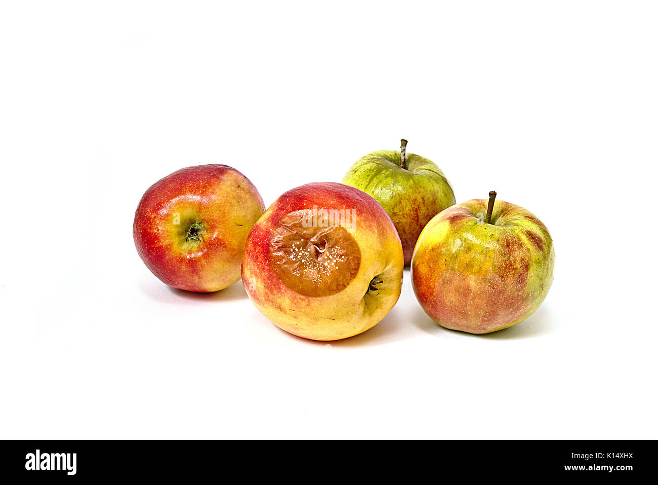 Bad apple with mold among edible apples - Stock Image