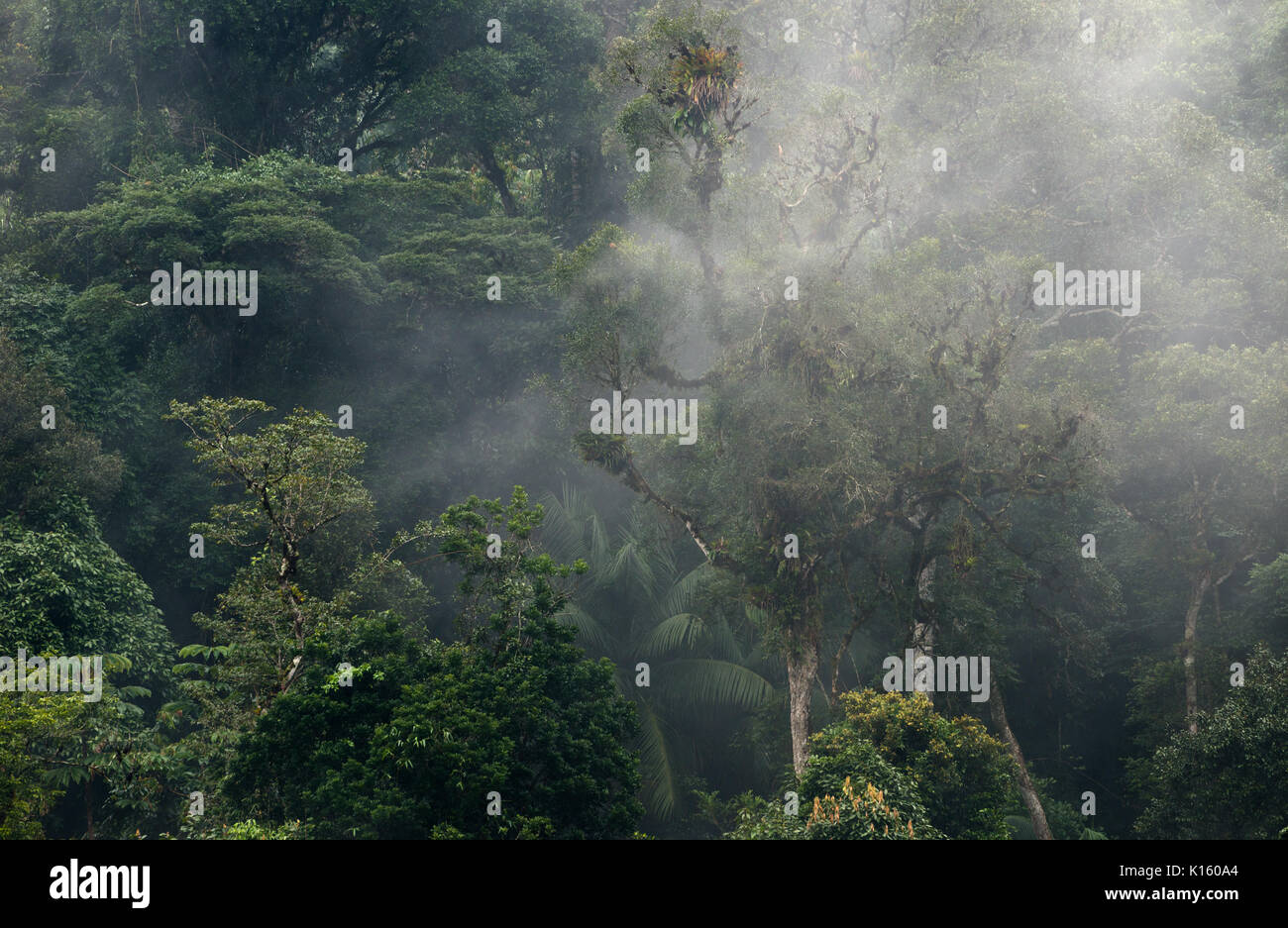 Humidity mist covering the Atlantic Rainforest - Stock Image