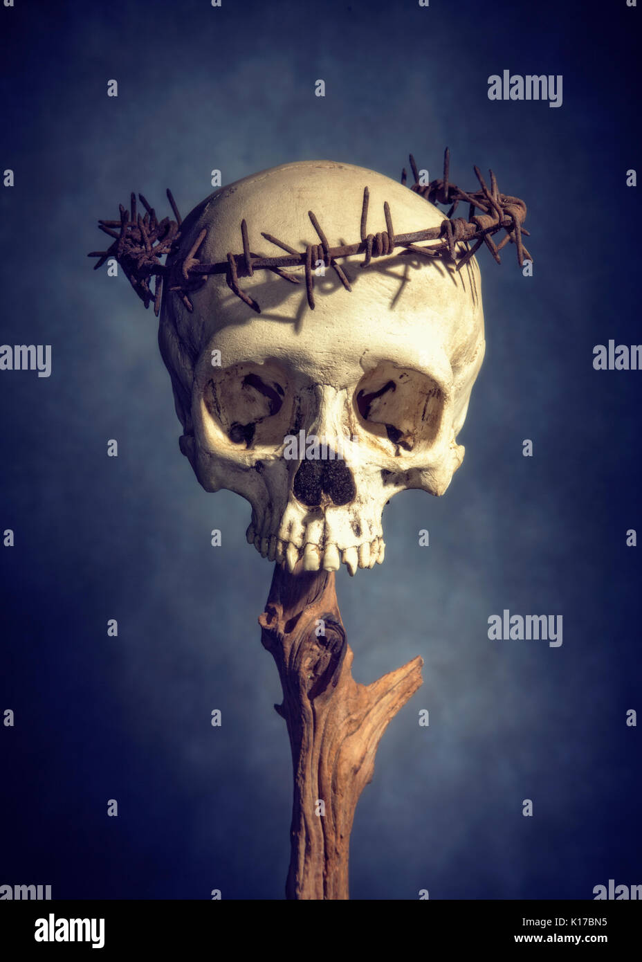 Color photograph of skull with barbed wire crown - Stock Image