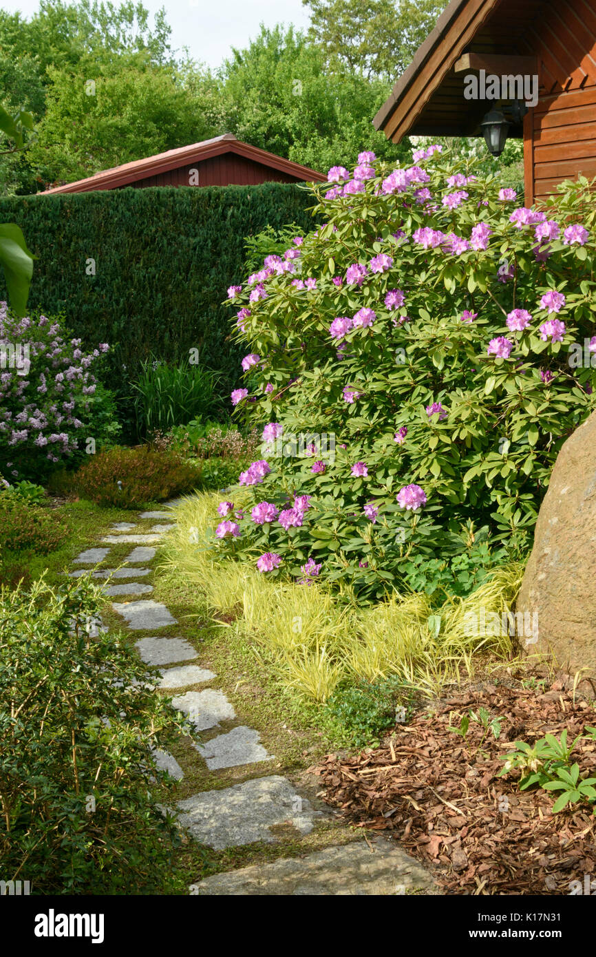 Rhododendron Rhododendron In Front Of A Garden House Design
