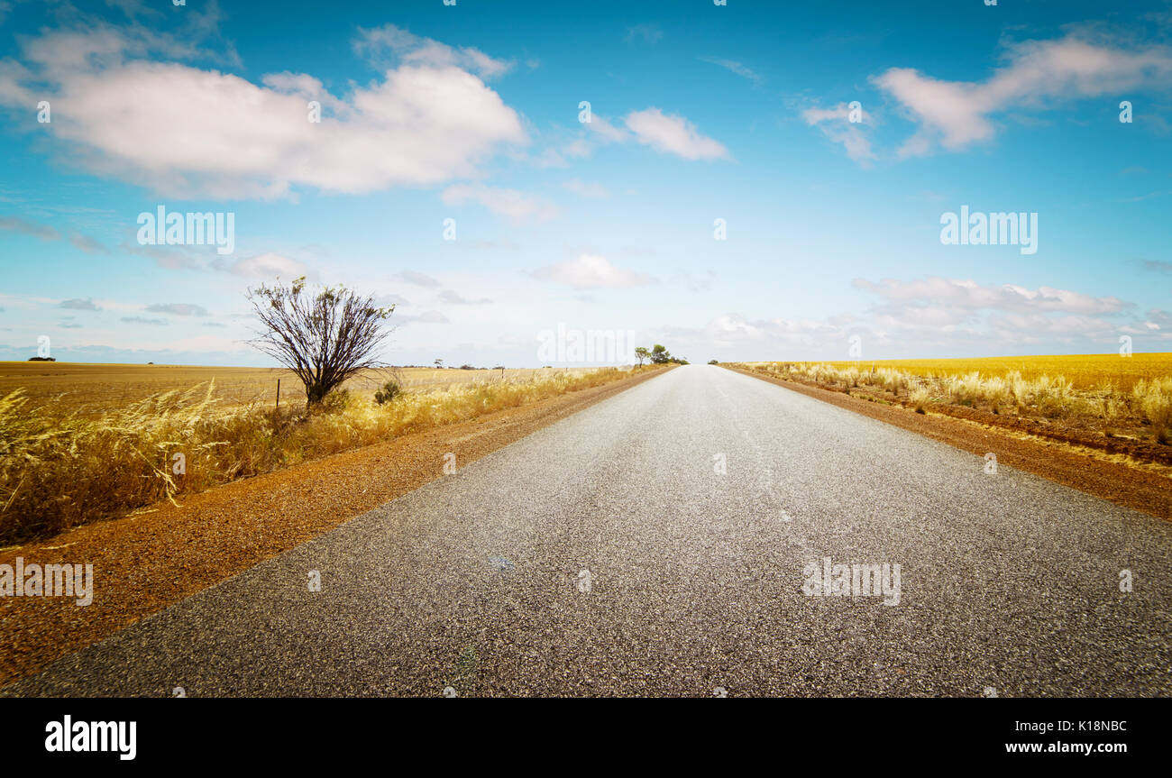 Straight road goes to horizon on background of ble sky and Golden wheat field. - Stock Image