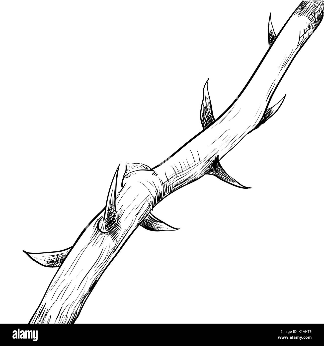 Hand drawing of Thorn. Black and White simple line Vector Illustration for Coloring Book - Line Drawn Vector - Stock Vector