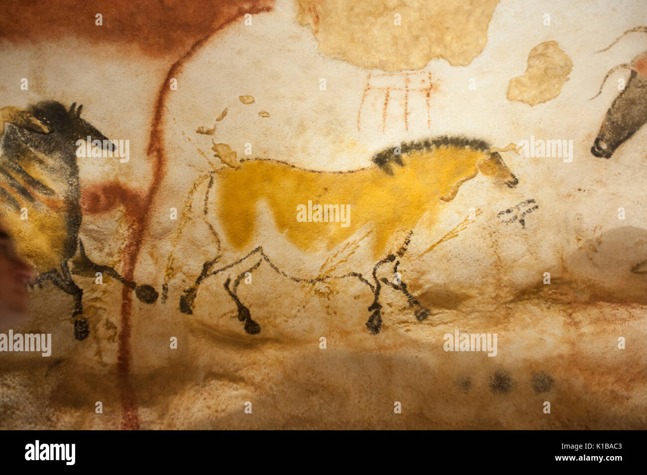 Prehistoric cave paintings of wild horse, (dun horse), Lascaux IV ...