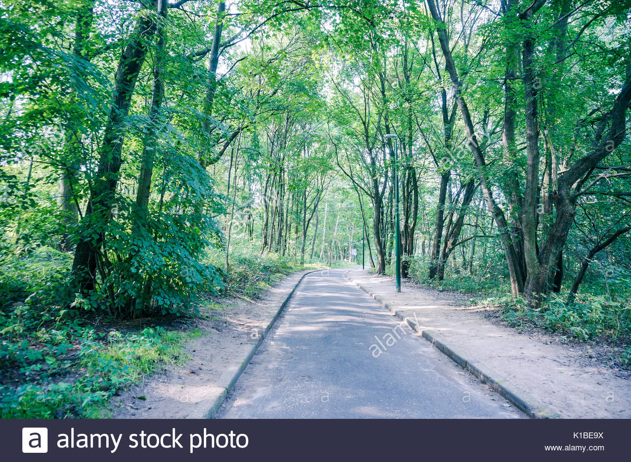 Footpath along a green forest in rich and cool colors - Stock Image