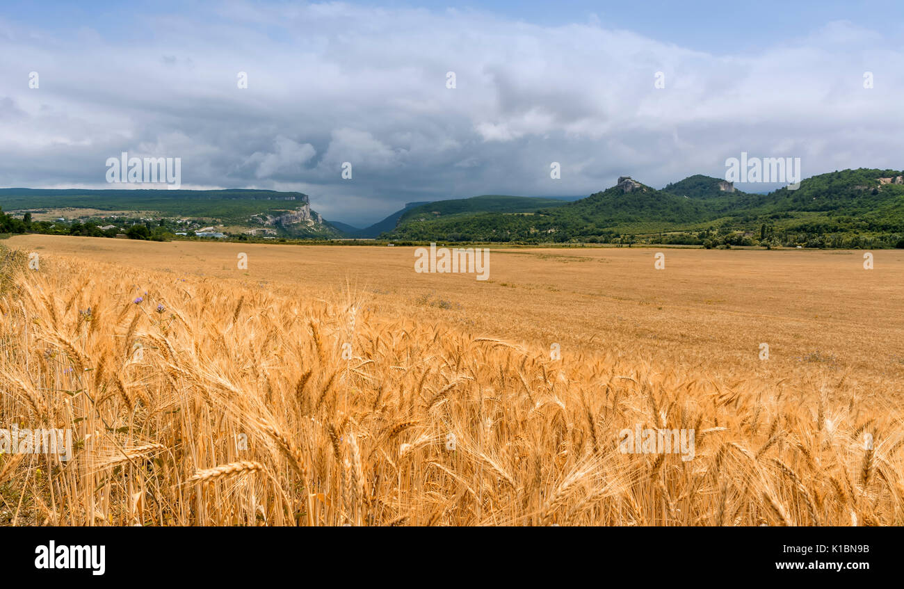 Field of wheat with mountainous backdrop. Stock photo. - Stock Image