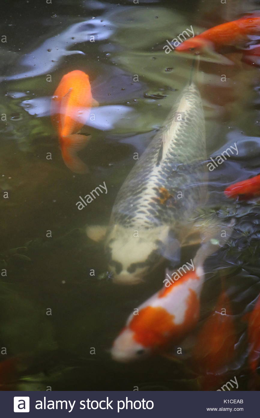 automatic a picture and installation n pond feeder index in fish operation