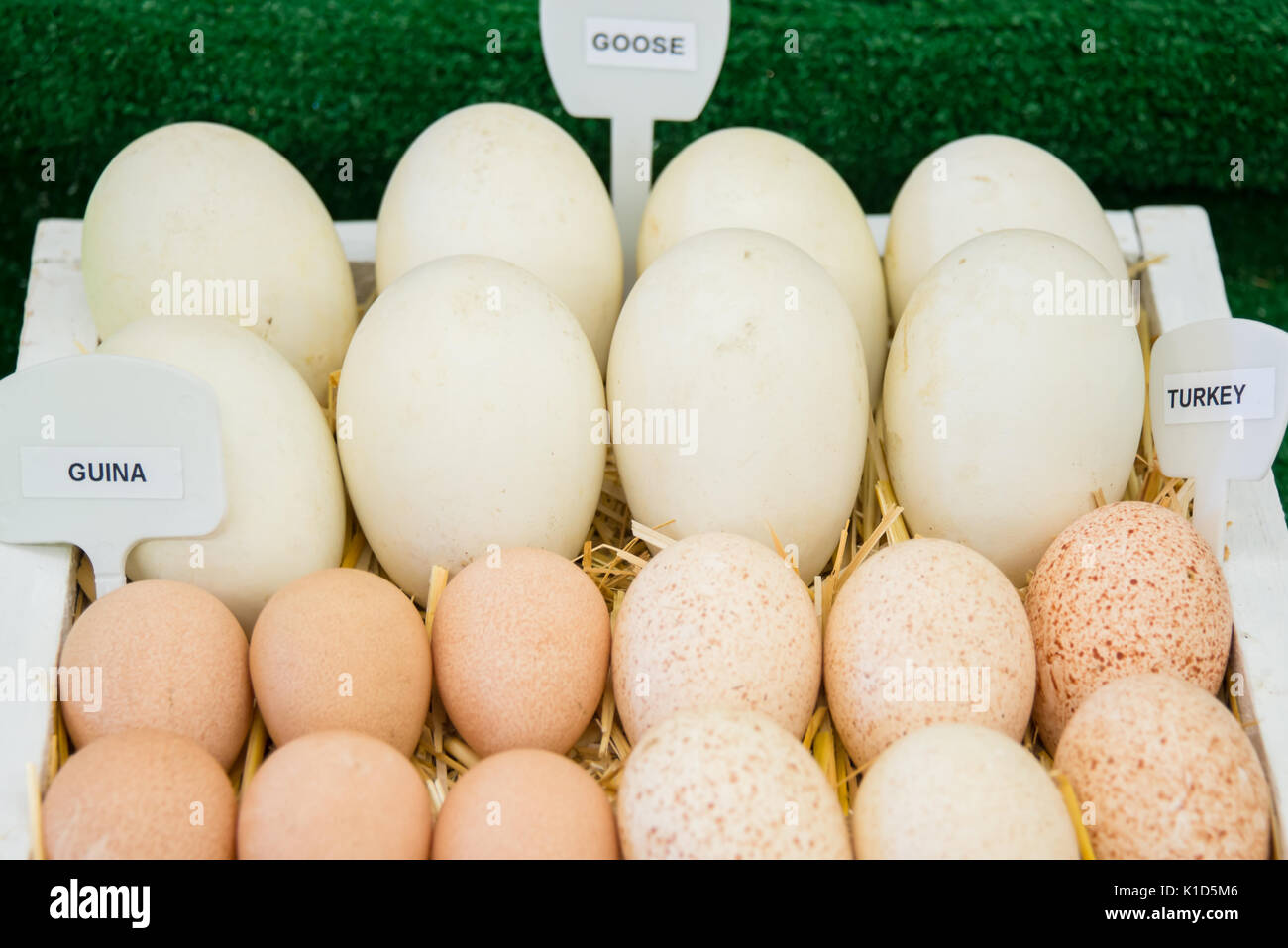 Guina, Goose, and Turkey Eggs Labeled - Stock Image